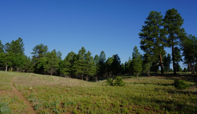 Trail through meadows and pines